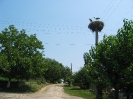 Щъркелово гнездо на стълб