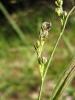 Защитени и редки видове растения